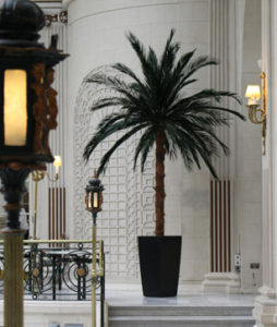 Interior Planting - Palm tree
